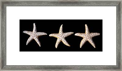 Three Stars - Sepia Framed Print