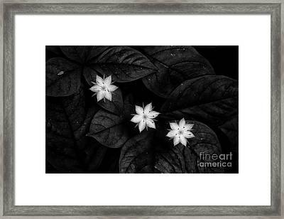 Three Stars Framed Print by Masako Metz