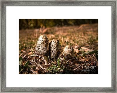Three Stooges Framed Print by Robert Bales