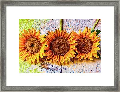 Three Sunflowers Still Life Framed Print by Garry Gay