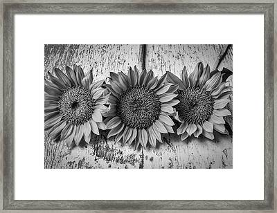 Three Sunflowers Still Life In Black And White Framed Print by Garry Gay