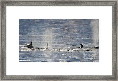 Three Surface Framed Print by Mike Dawson