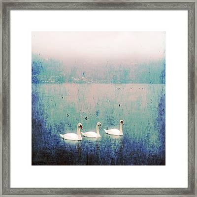Three Swans Framed Print by Joana Kruse