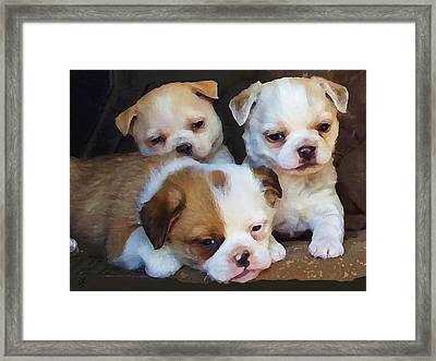 Three Sweeties Framed Print