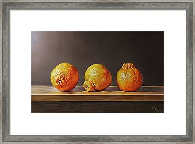 Three Tangelos Framed Print by Elena Kolotusha