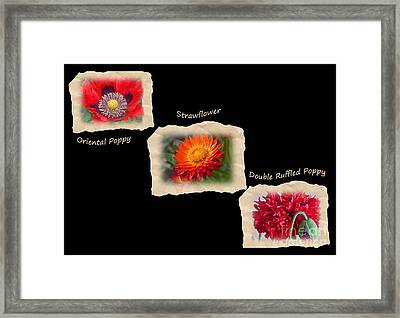 Three Tattered Tiles Of Red Flowers On Black Framed Print by Valerie Garner