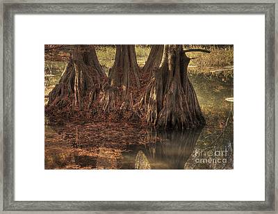 Framed Print featuring the photograph Three Trees In Lake Murray by Tamyra Ayles
