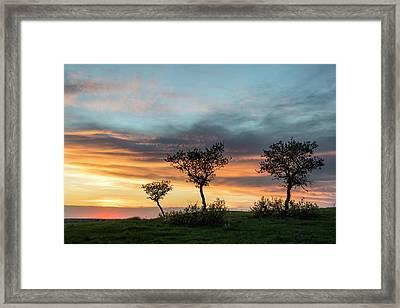 Three Trees On A Hill Framed Print