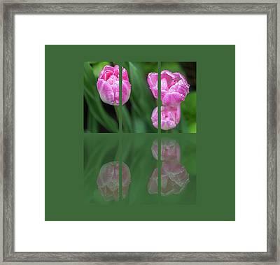 Three Tulip Triptych Framed Print