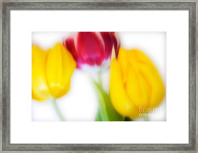Three Tulips Framed Print by Janet Burdon