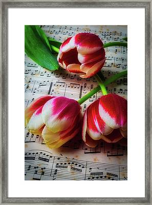 Three Tulips On Sheet Music Framed Print by Garry Gay