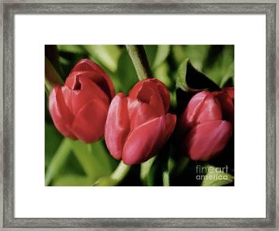 Three Tulips Framed Print by Susan  Lipschutz