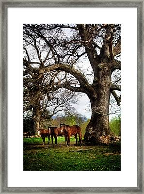 Three Under A Tree Framed Print by Greg Mimbs