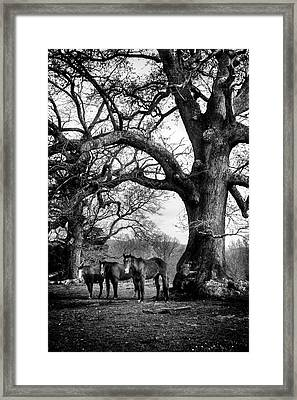 Three Under A Tree In Black And White Framed Print by Greg Mimbs