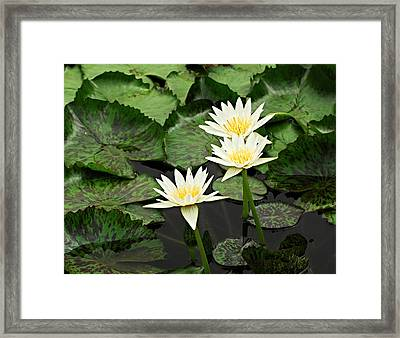 Three Water Lilies Framed Print