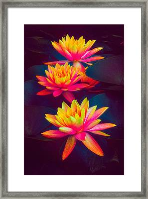 Framed Print featuring the photograph Three Waterlilies by Chris Lord