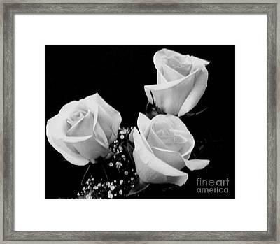 Three White Beauty Roses Framed Print by Marsha Heiken