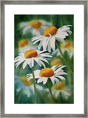 Three Wild Daisies Framed Print by Sharon Freeman