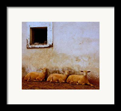 Delawares Framed Prints