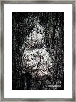 Three Wishes Framed Print by Charles Dobbs