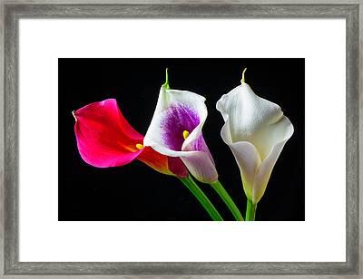 Three Wonderful Calla Lilies Framed Print
