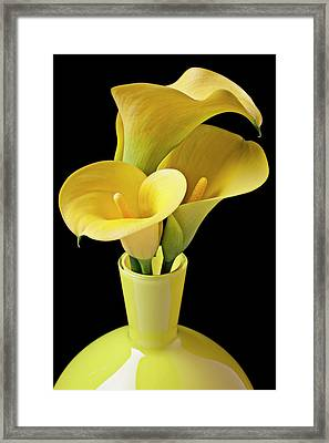 Three Yellow Calla Lilies Framed Print by Garry Gay