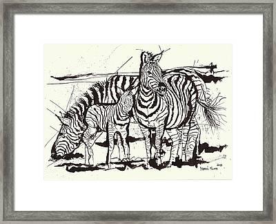 Three Zebra Black Ink Framed Print