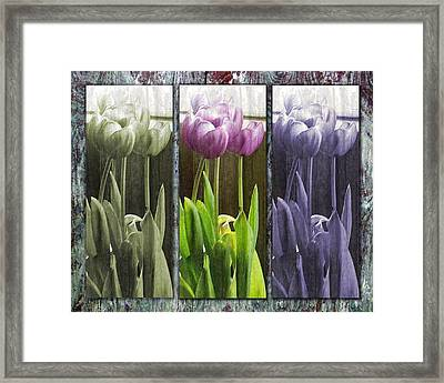 Framed Print featuring the photograph Threelips by Tom Romeo