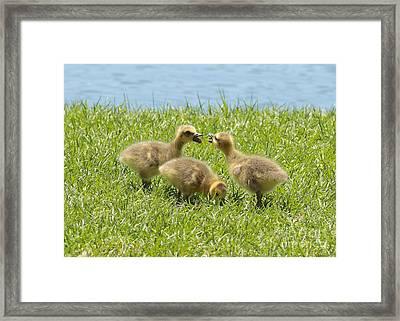 Three's A Crowd Framed Print by Carol Groenen