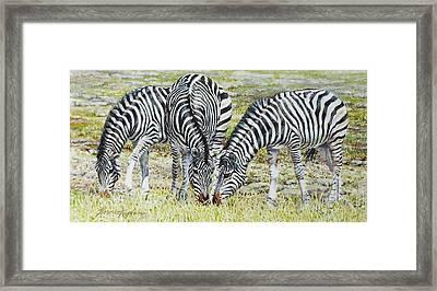 Three's Company Framed Print