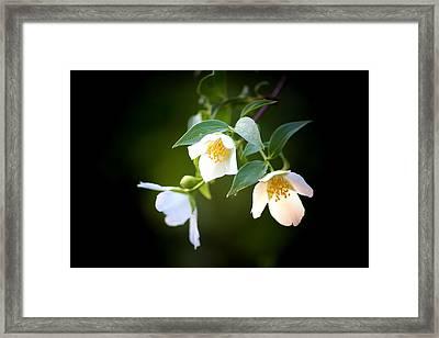 Threes Company Framed Print