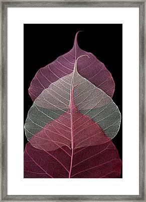 Threesome Framed Print by Maggie Terlecki