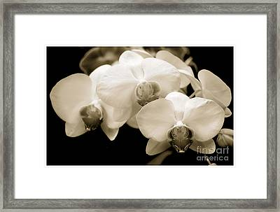 Threesome Framed Print by Son Of the Moon