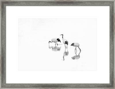 Threesome. Framed Print
