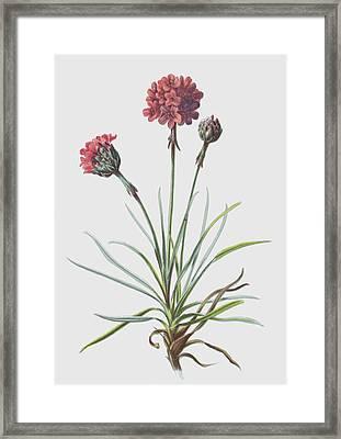 Thrift Framed Print by Frederick Edward Hulme
