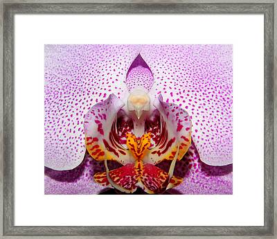 Throat Of An Orchid Framed Print