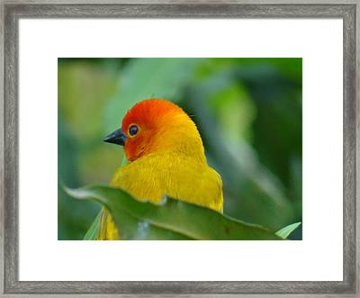 Through A Child's Eyes - Close Up Yellow And Orange Bird 2 Framed Print