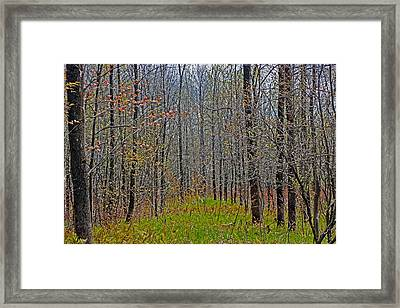 Through A Forest Wilderness Framed Print