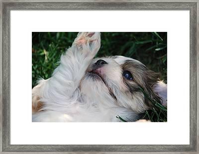 Through A Puppy's Eyes Framed Print