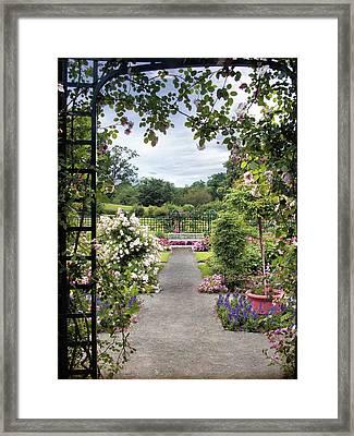 Through A Rose Pergola Framed Print by Jessica Jenney