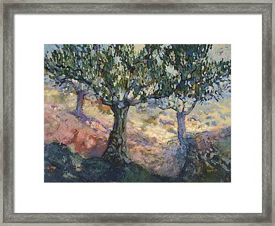 Through Ancient Olives Framed Print by Jen Norton