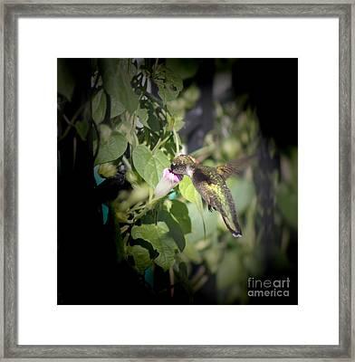 Through Garden Gates  Framed Print