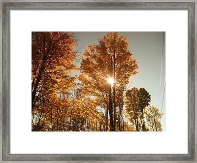 Through Sun Glasses Framed Print