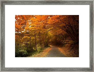 Through The Autumn Glory Framed Print