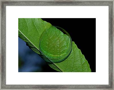 Through The Bubble Framed Print by Marilynne Bull