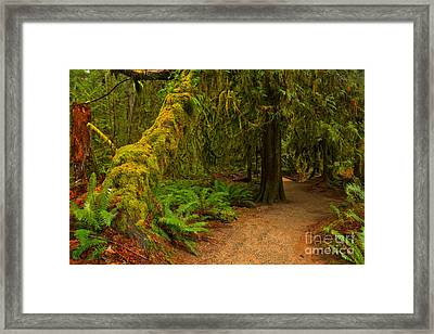 Through The Cathedral Framed Print by Adam Jewell