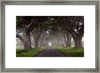 Through The Cypress Framed Print