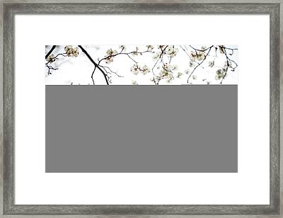 Through The Dogwood Framed Print by Mother Nature