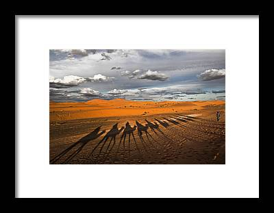 Dromedary Framed Prints