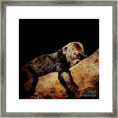 Through The Eyes Of Hasani . Square Framed Print by Wingsdomain Art and Photography